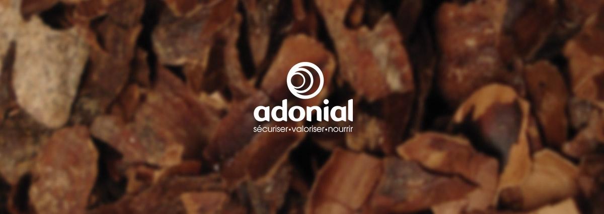 Présentation Adonial - Site Internet - Bretagne, Morbihan, Vannes (56)