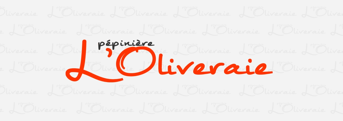 Présentation L'oliveraie - Site Internet - Bretagne, Morbihan, Vannes (56)